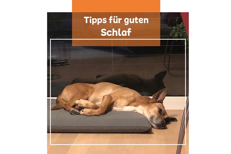 Hundemüde – 5 Tipps Für Einen Guten Schlaf